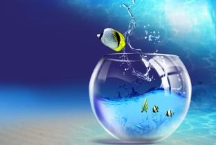Выбираем воду для аквариума.