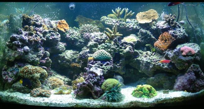 Какую среду обитания предпочитают аквариумные рыбы.