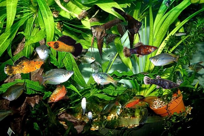 Перенаселенный аквариум.