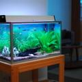Какотстаивать воду для аквариума.