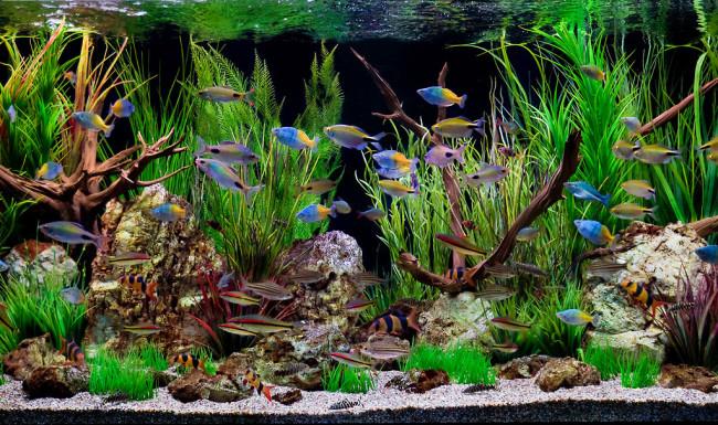 Разведение и уход за рыбами и аквариумом.