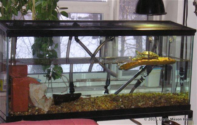 Простой аквариум для красноухой черепахи.