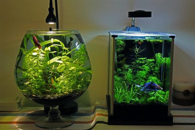 Два аквариума для петушков.