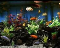 Идея аквариума для цихлид.