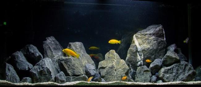 Дизайн аквариума для цихлид.