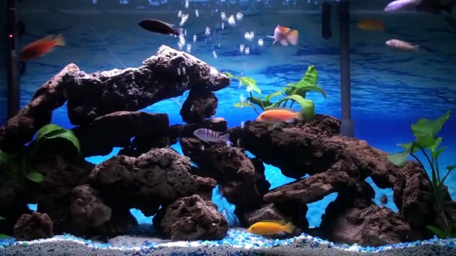 Дизайн аквариума для цихлид самостоятельно.
