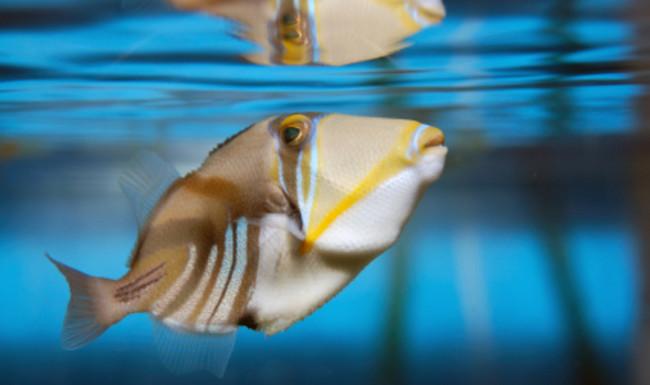 Рыбкам не нужен воздух.