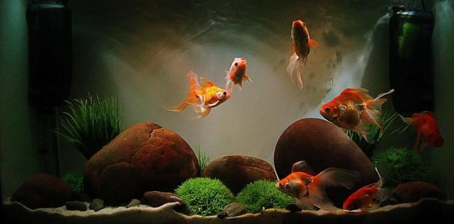 Аквариум для золотой рыбки.