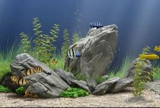 Камни для аквариума.