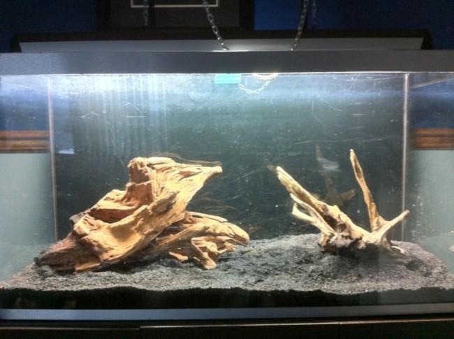 Две коряги в аквариуме.