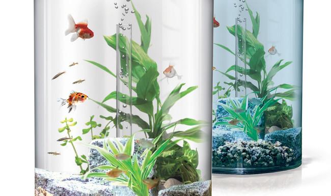 10 литровый аквариум.