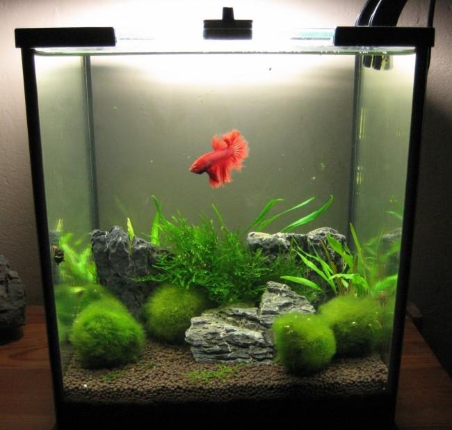 Маленький аквариум с рыбкой.
