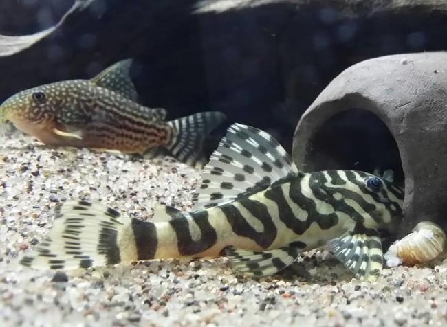 Рыбка на дне аквариума.