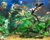 Совместимость аквариумных рыбок.