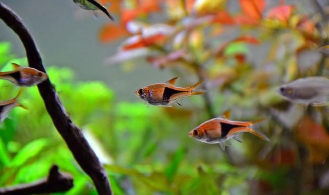 Рыбки для начинающих.
