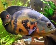 Оскар в аквариуме.