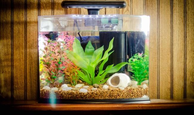 Небольшой аквариум.