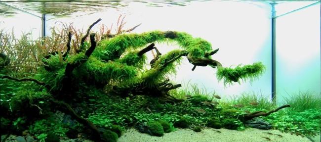 Оформление аквариума.