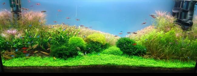 Дизайн аквариума.