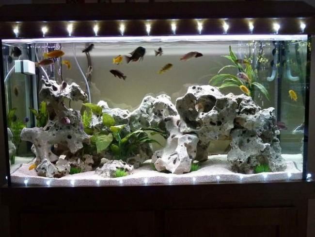 Дизайн домашнего аквариума.