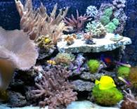 Аквариум с морскими рыбками.