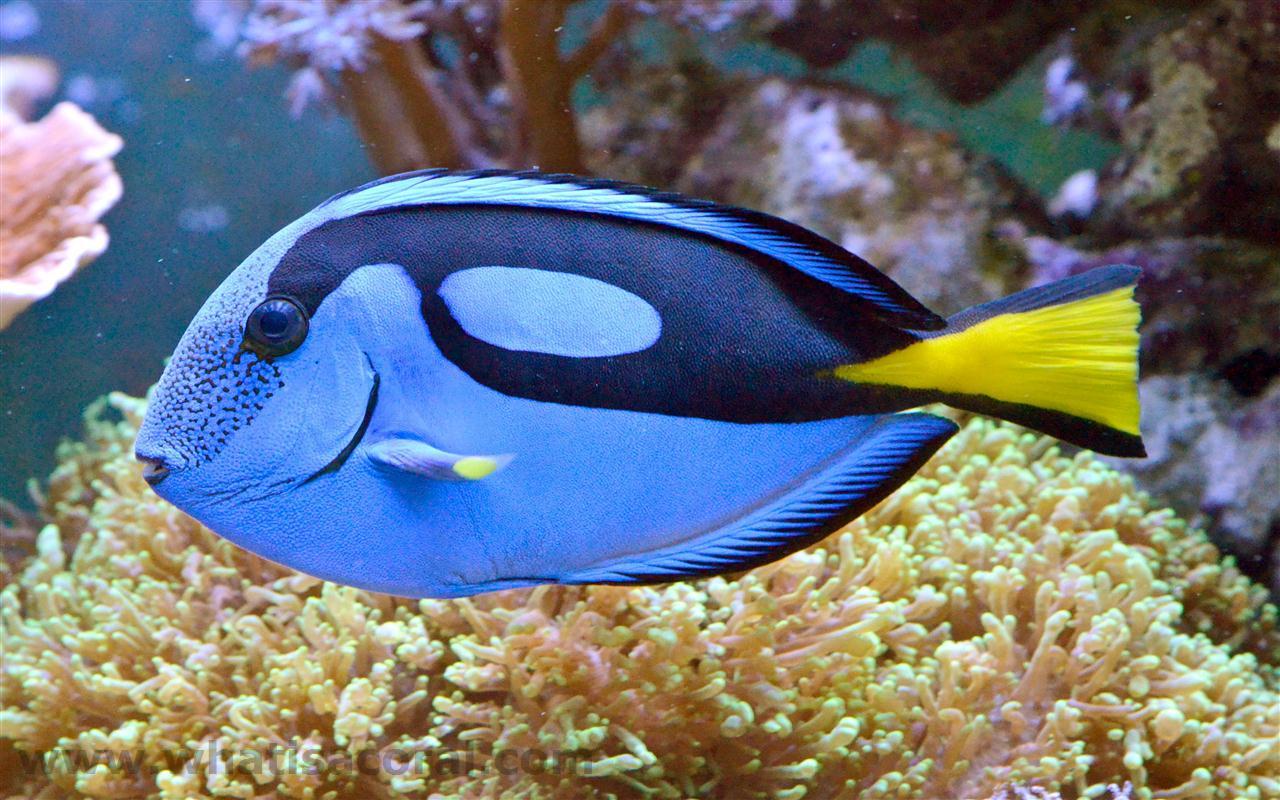 картинки экзотических рыб с названиями машины использовались