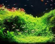 Аквариумные растения для начинающих.
