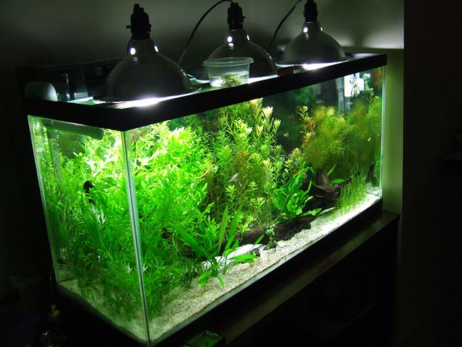 Освещение аквариума с растениями.