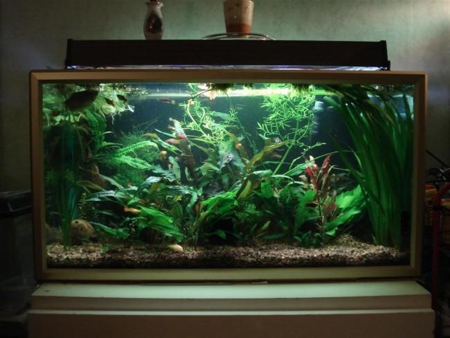 Освещение среднего по размеру аквариума.