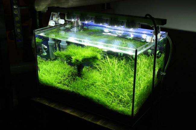 Освещение аквариума на светодиодах своими руками.