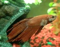 Болезни аквариумных рыб.