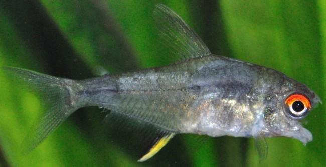 Заболевание аквариумных рыб.