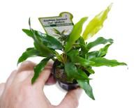 Как посадить растения в аквариуме.