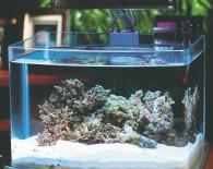 Маленький морской аквариум.