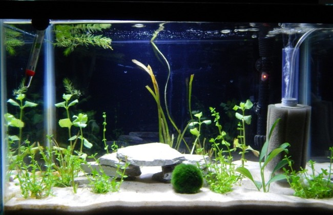 Внутренний фильтр в аквариуме.