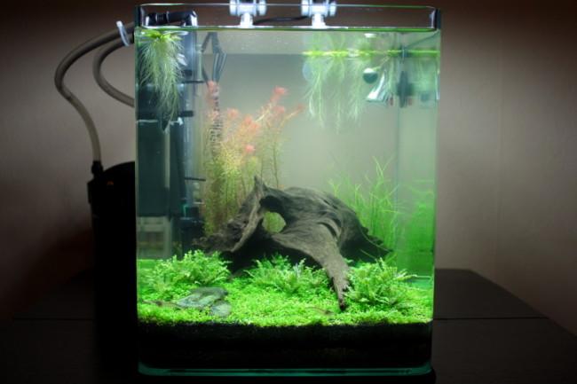 Внутренний фильтр для нано аквариума.