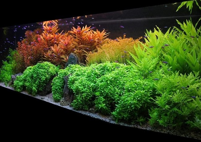 Растения в аквариуме.
