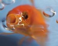 Кормление рыб.