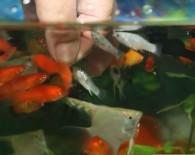 Живой корм для аквариумных рыб.