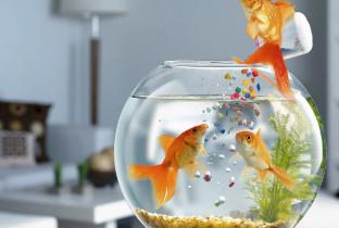 Корм для аквариумных рыбок.