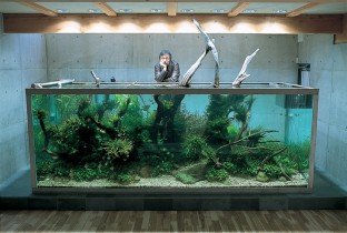 Дизайнер акваскейпов Амано Такаши.