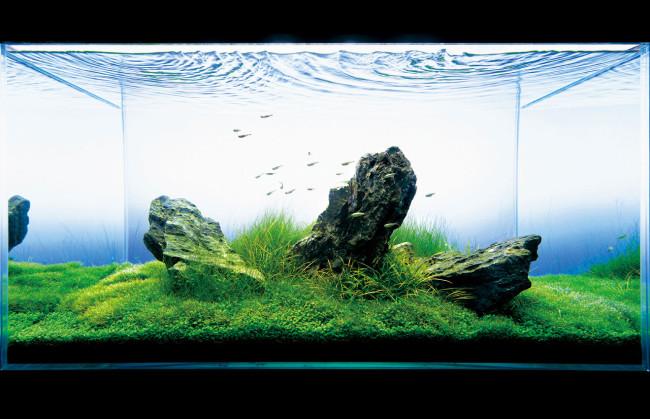 Дизайн аквариума Такаши Амано.