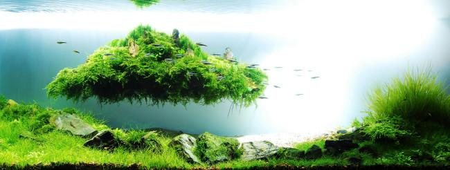 Природный аквариум Амано Такаши.